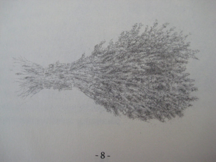lavender, 9/11